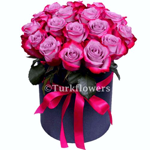 21 Purple Roses in Box