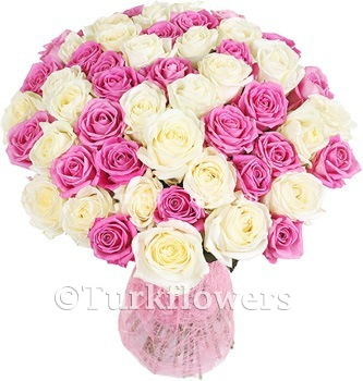 51 Pink White Roses