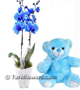 Blue orchid baby flower