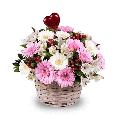 Pink and White Mini Gerberas