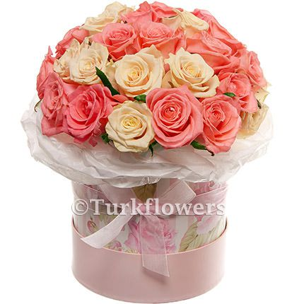 Pink and creamy Roses