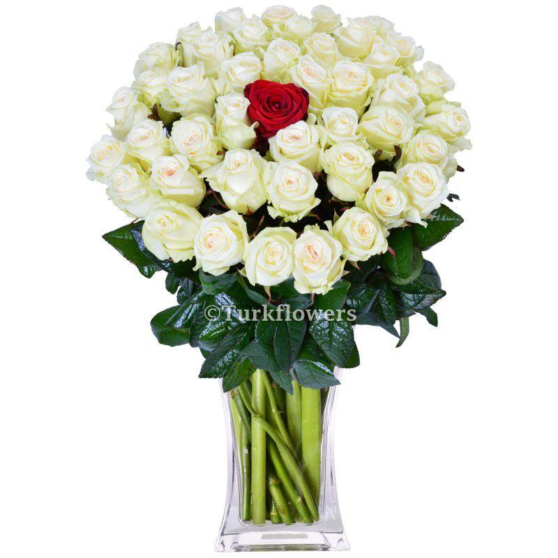 50 White Roses + 1 Red roses