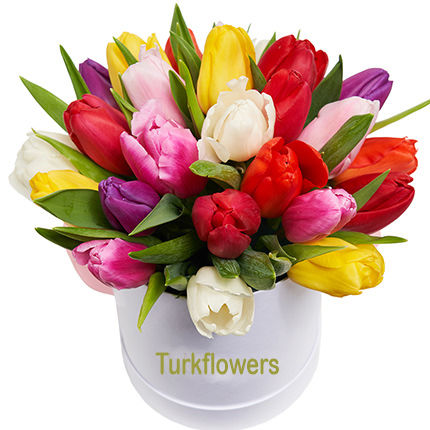 25-multi-colored-tulips