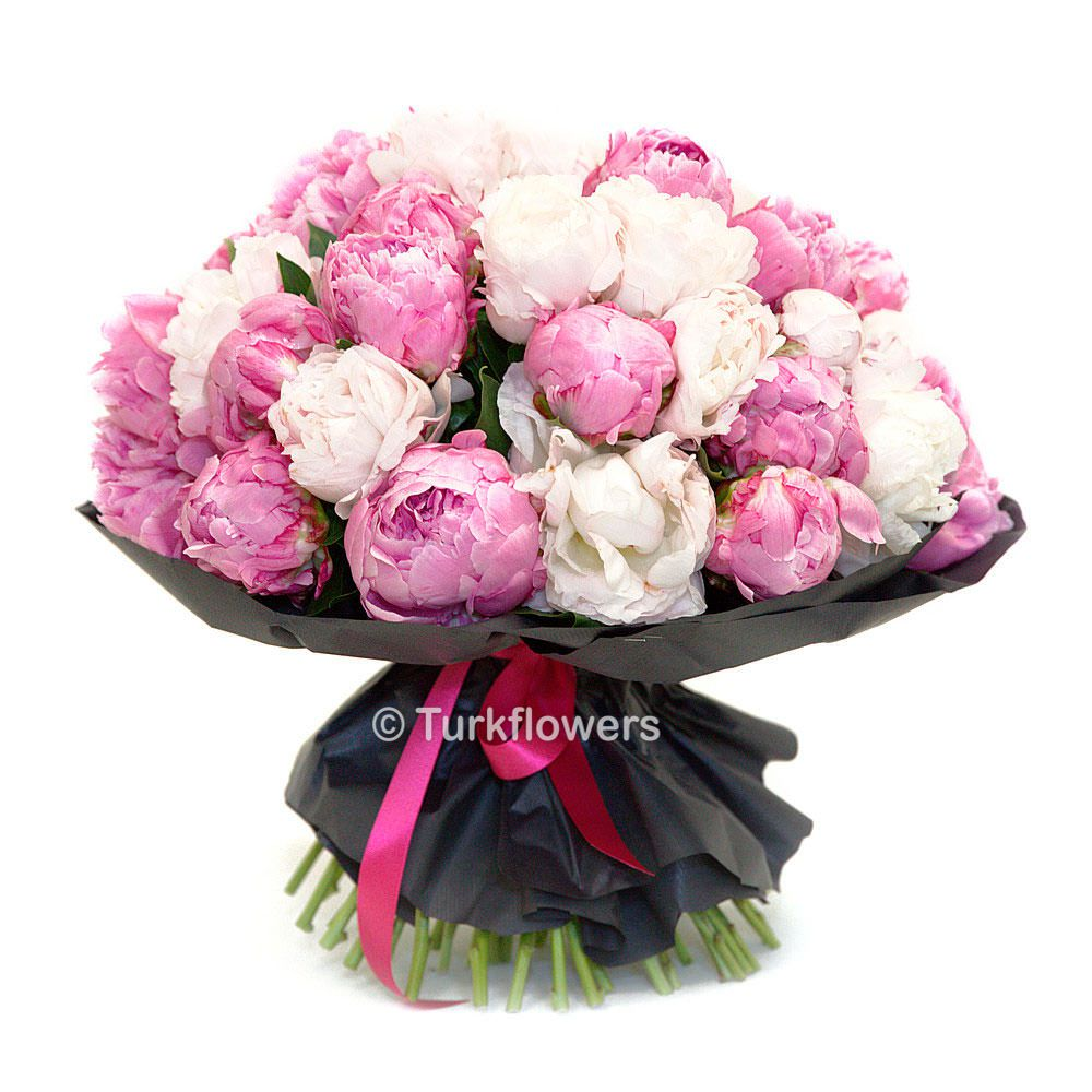 35-pink-and-white-peony