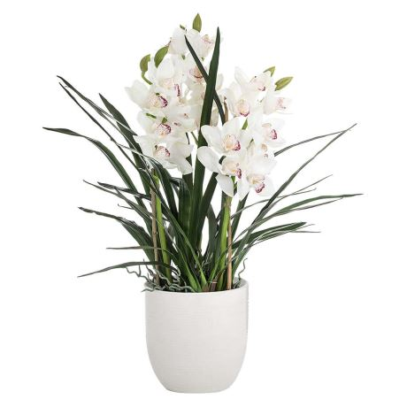 exclusive-white-cymbidium-orchid