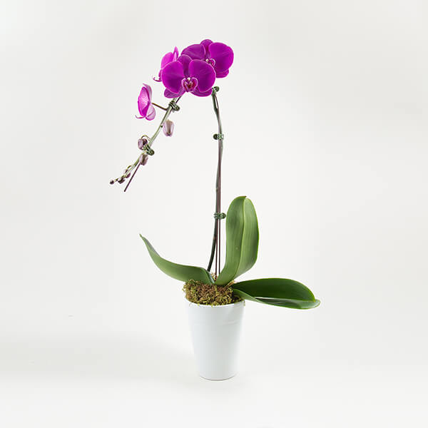 1-branch-purple-orchids