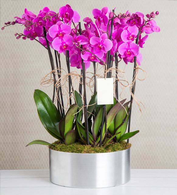 10-purple-orchid