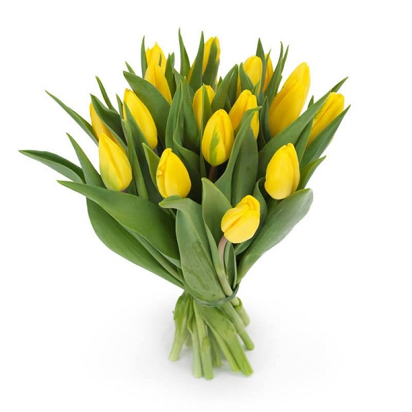 20-yellow-tulips