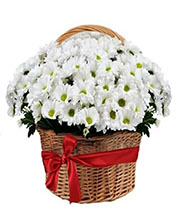 composition-basket-chrysanthemum-daisy-white